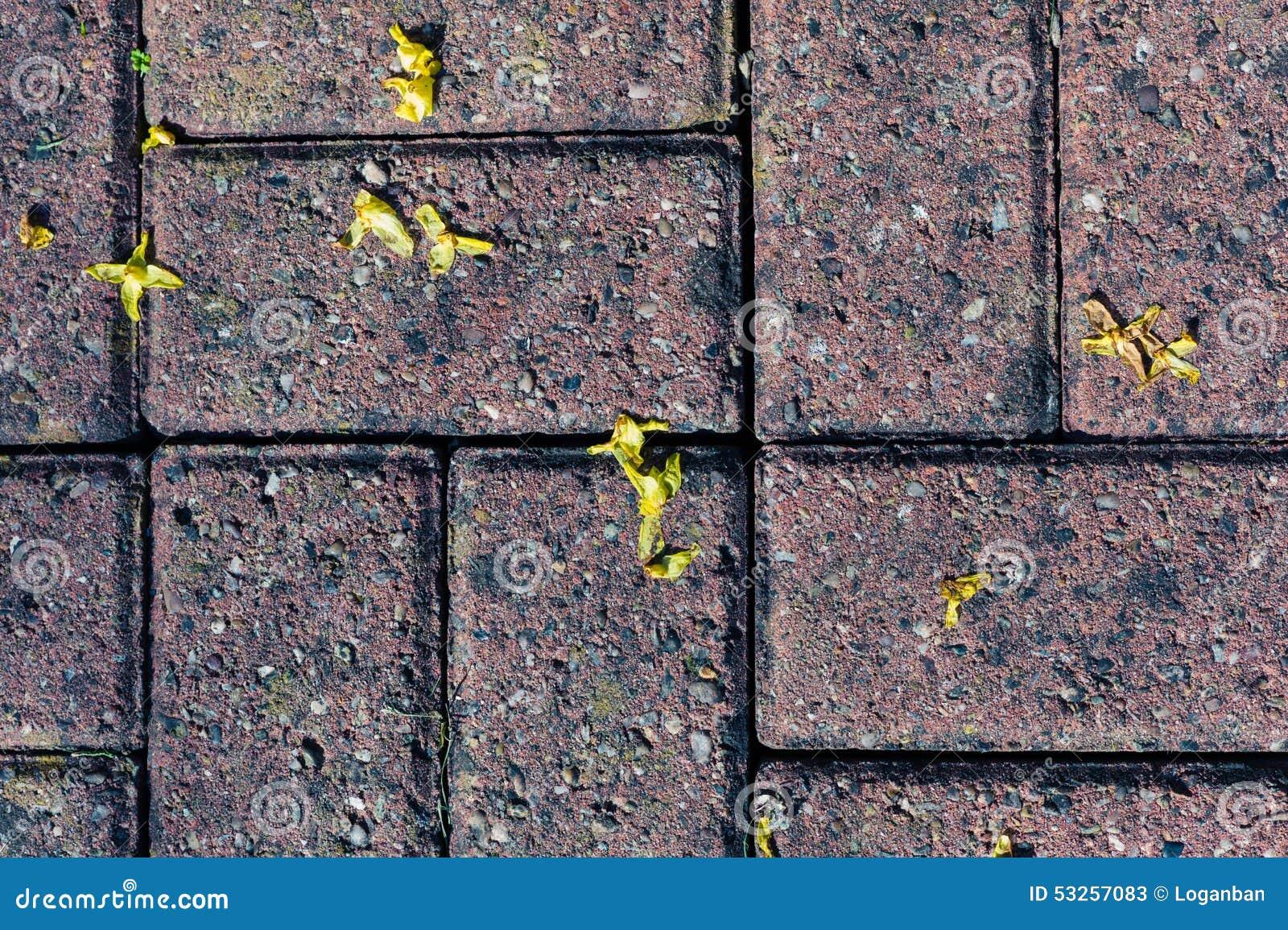 Tegels Voor Buiten : Bloemen op tegels buiten stock afbeelding. afbeelding bestaande uit