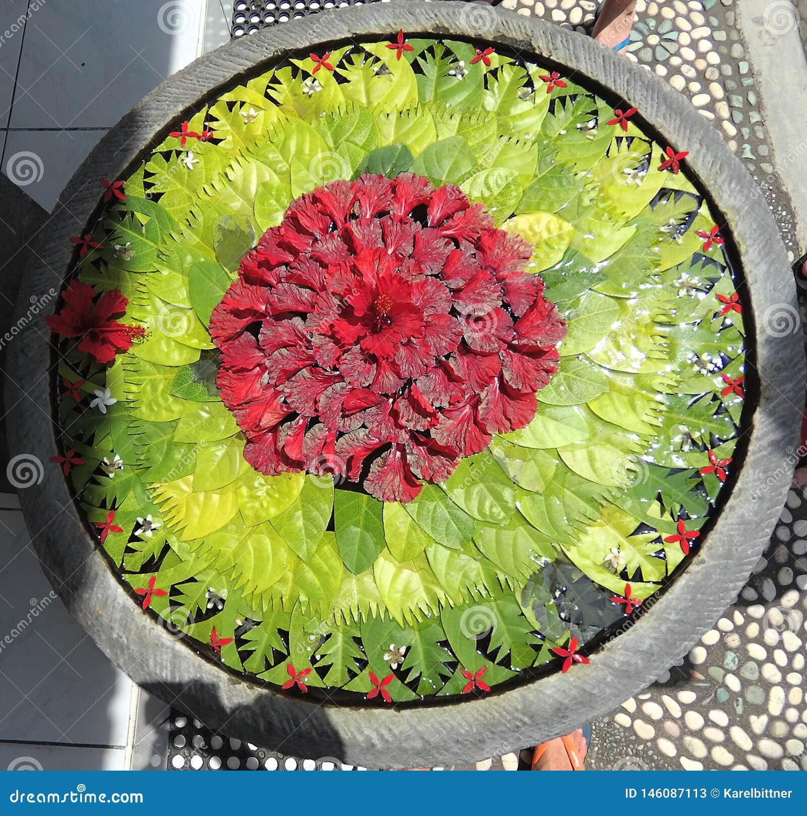 Bloemen op waterspiegel worden geschikt die