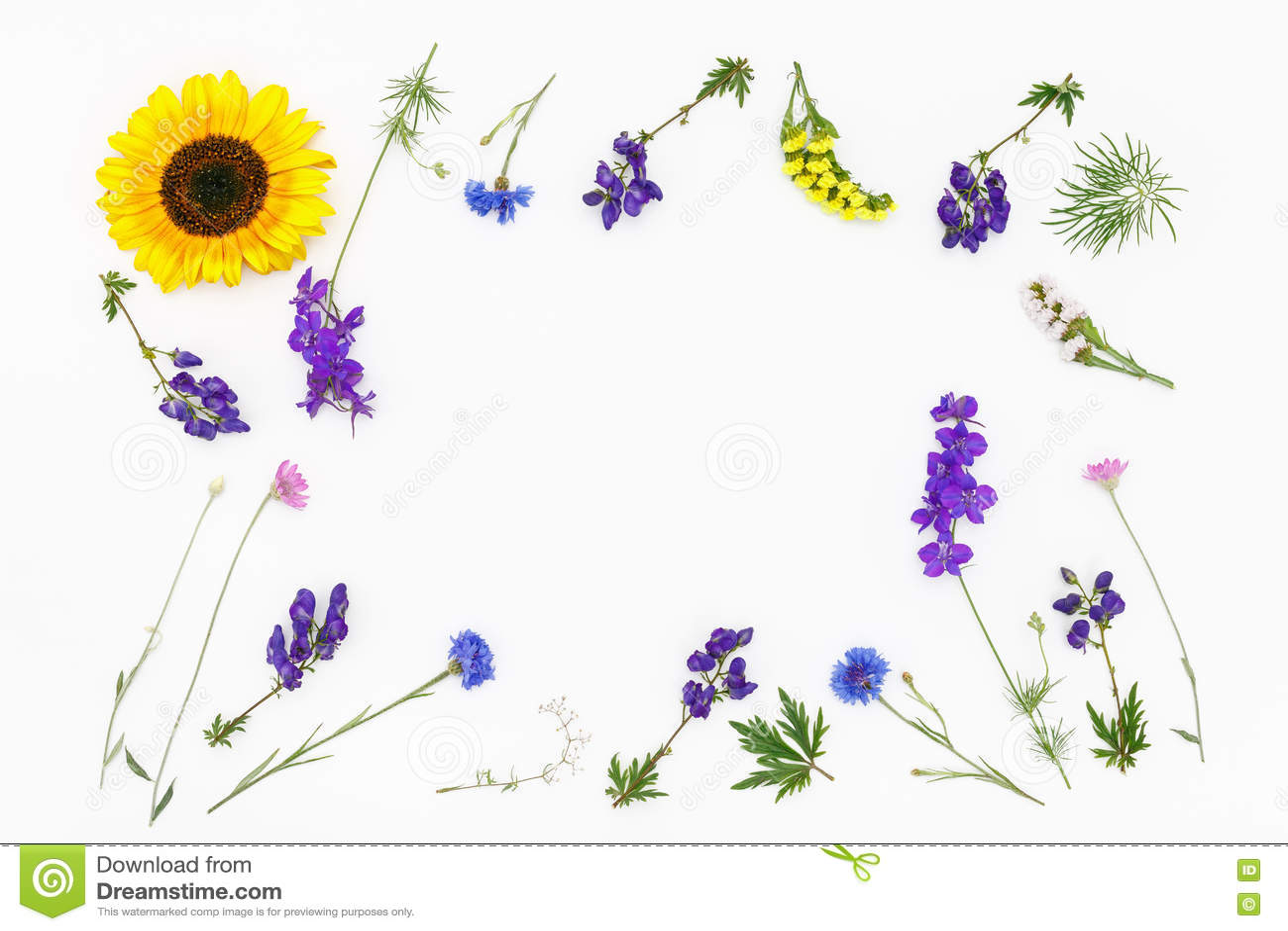 Bloemen op witte achtergrond De hoogste vlakke mening, legt