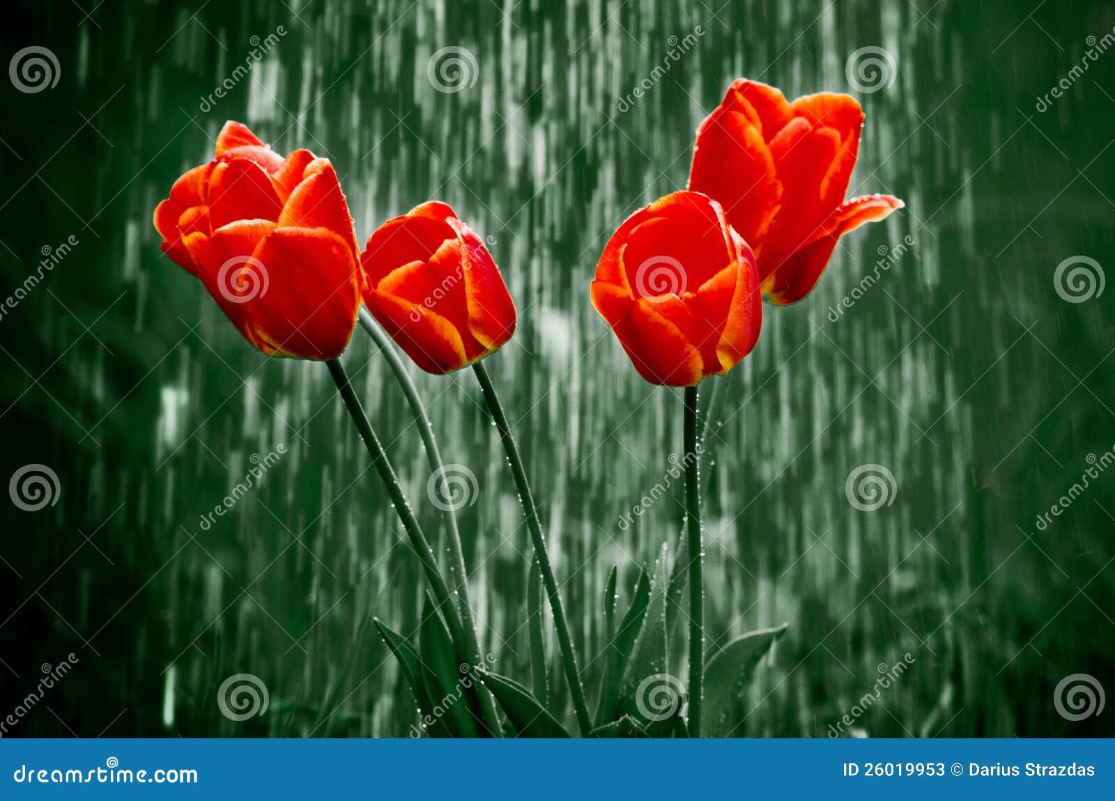 Bloemen in regen