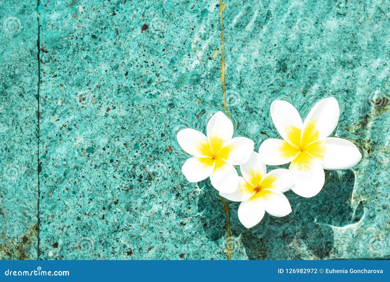 Bloemen van plumeria in de turkooise waterspiegel De exemplaar-ruimte van waterschommelingen De achtergrond van het kuuroordconce