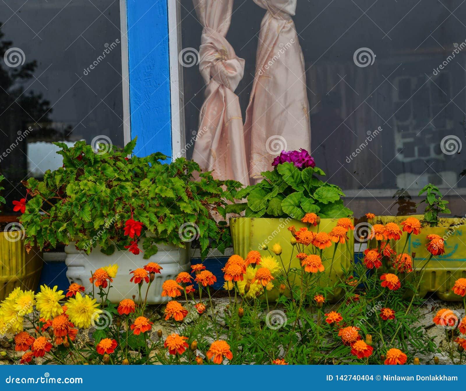 Bloemen voor decoratie bij landelijk huis
