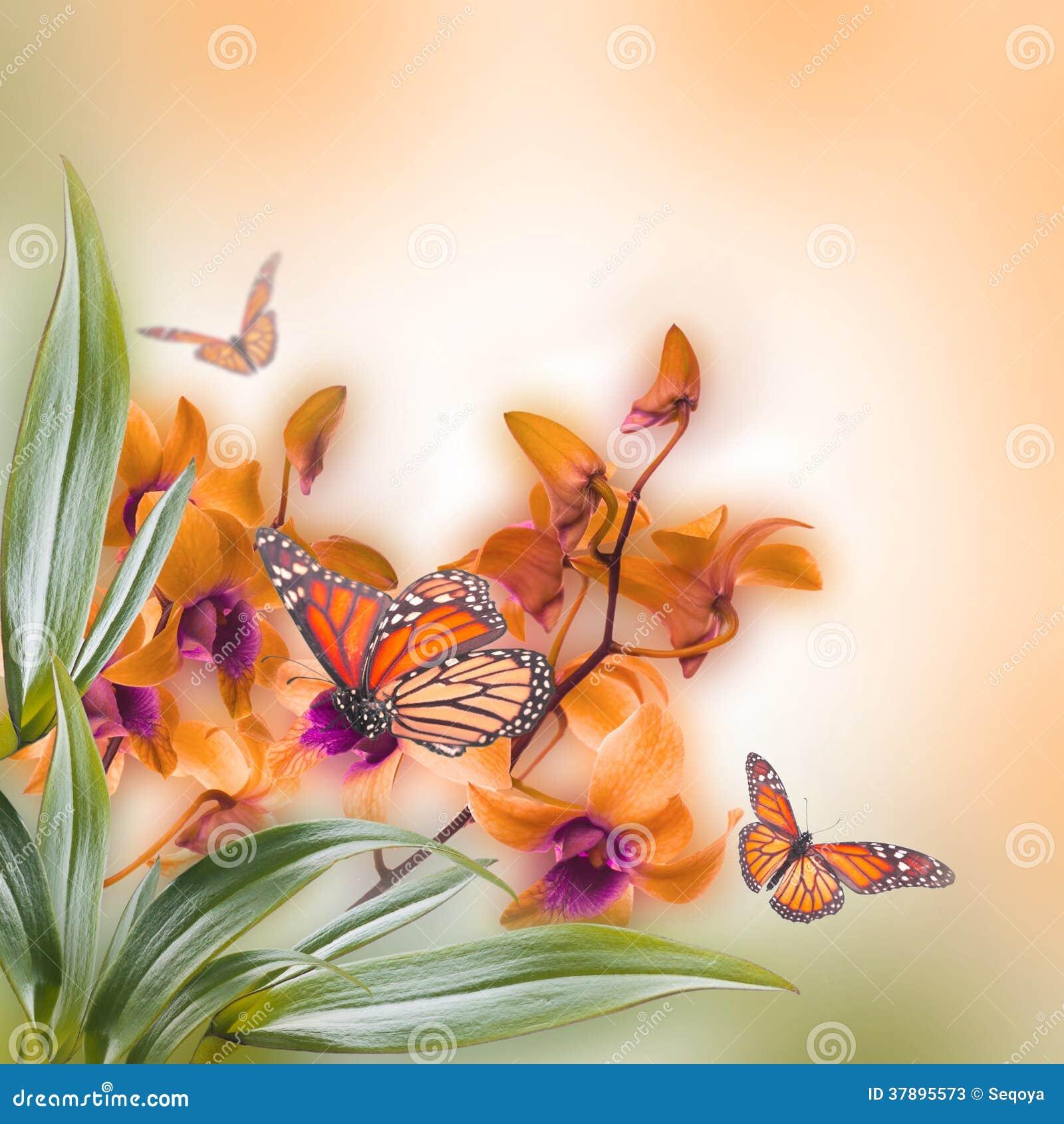 Bloemenachtergrond van tropische orchideeën