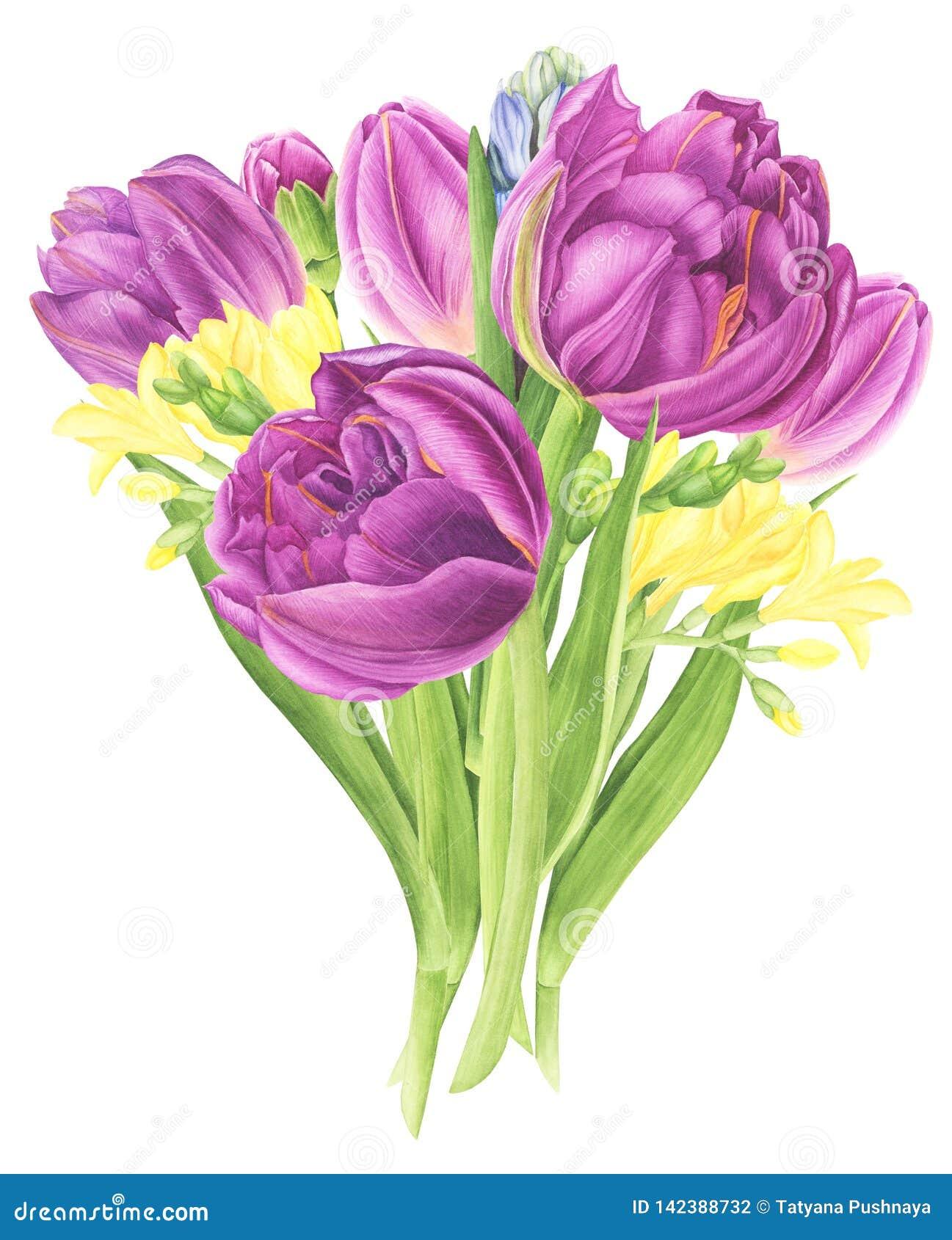 Bloemenboeket met tulpen, fresia en hyacinten, waterverf het schilderen