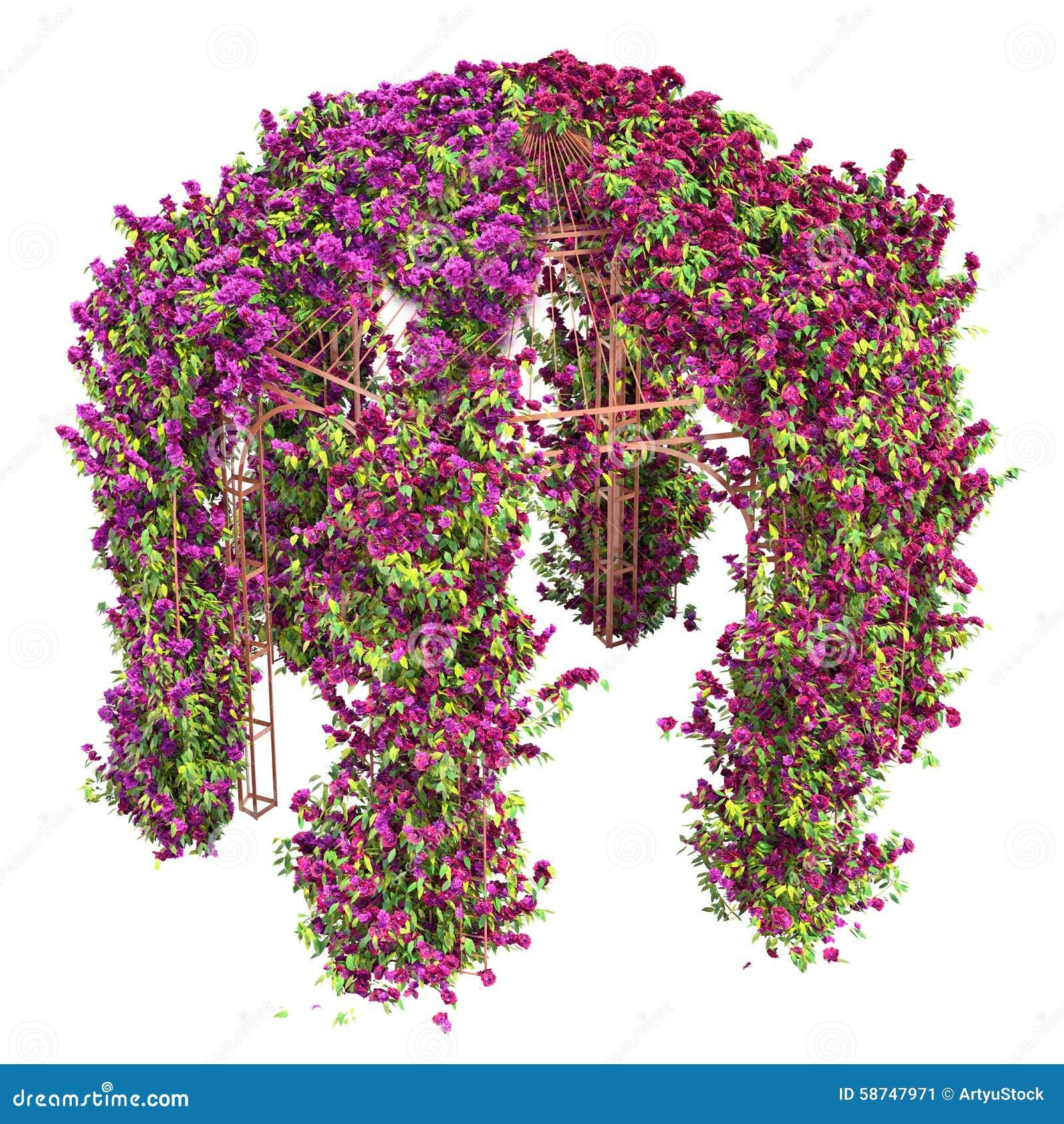 Bloemenkrul Op Een Pergola Van Metaalgazebo Stock Illustratie