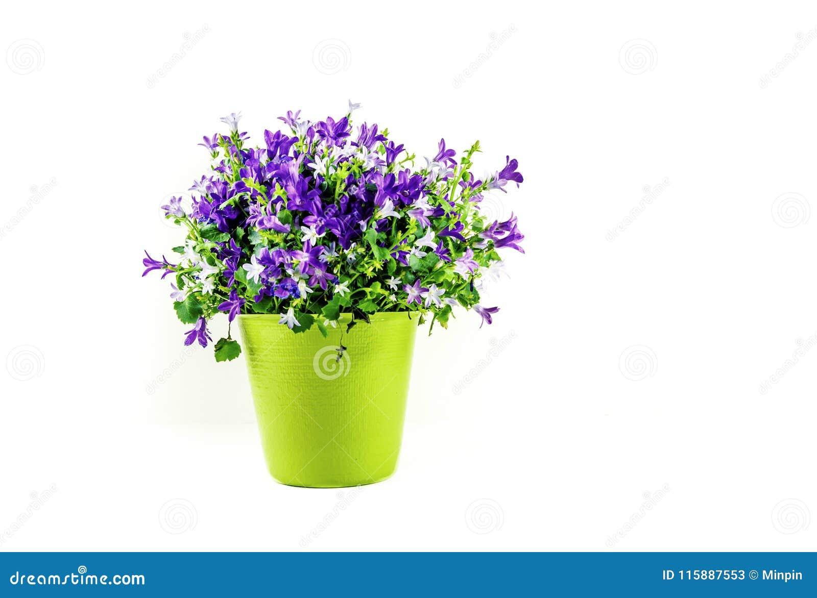 Bloemenregeling in Groene die Vaas op Witte Achtergrond wordt geïsoleerd -