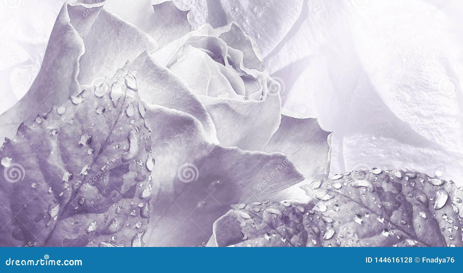 Bloemenwaterverf lichtpaarse achtergrond Nam bloemenclose-up toe