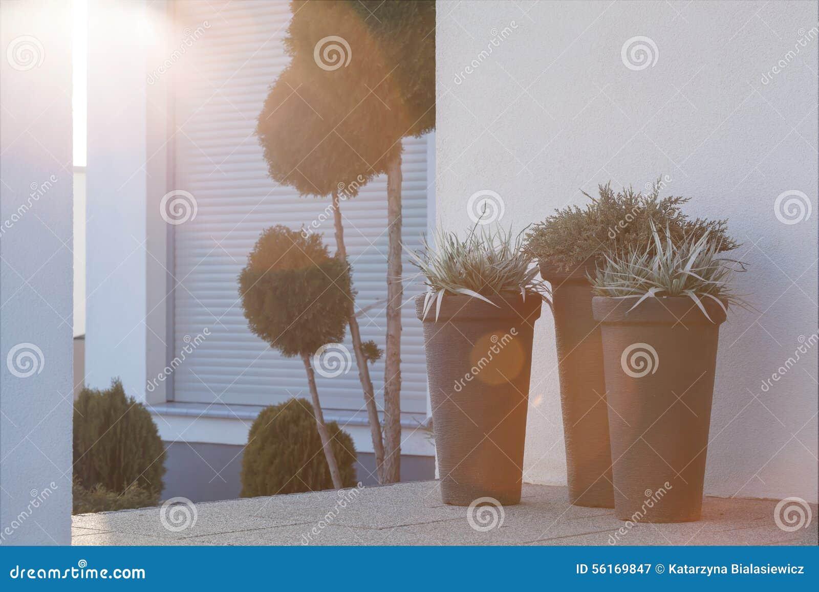 Bloempotten buiten het huis stock foto afbeelding 56169847 - Ingang huis idee ...
