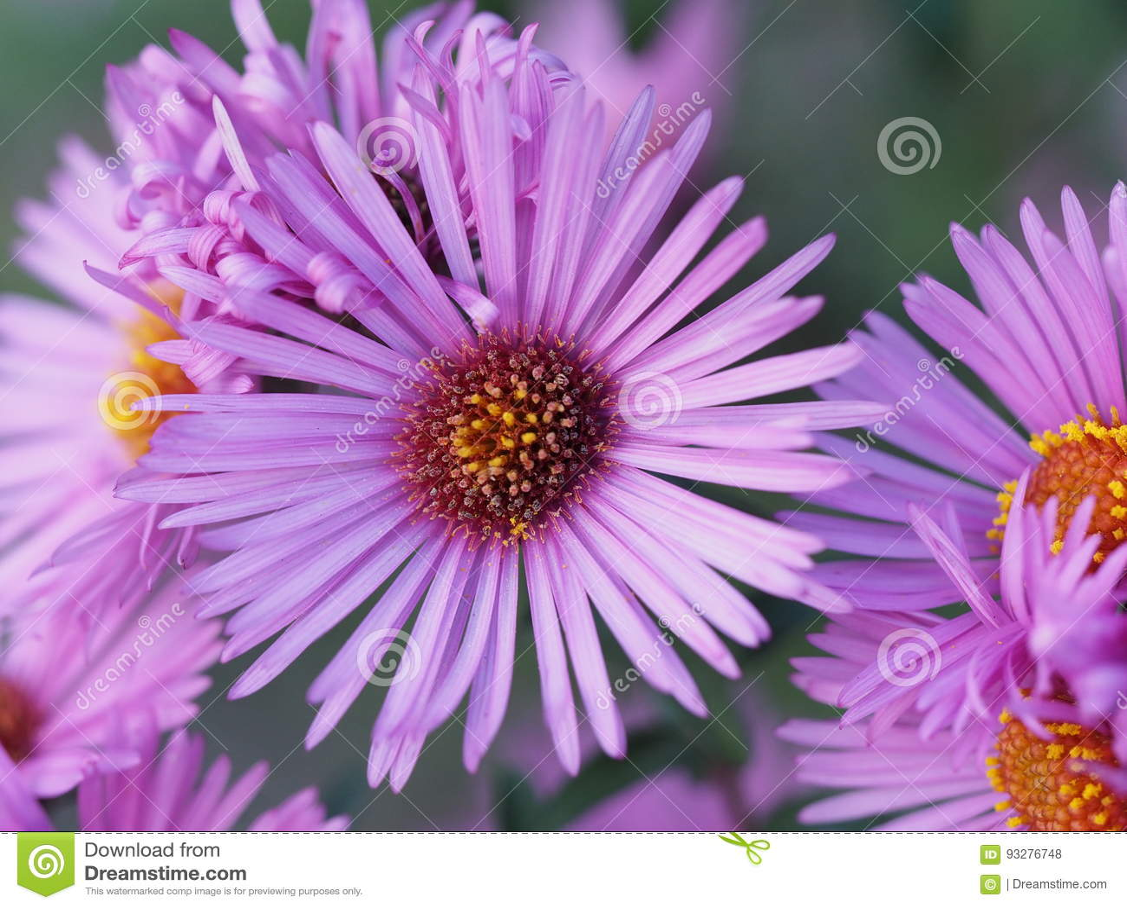 Blogging day - flower lilac sunny flower in the garden