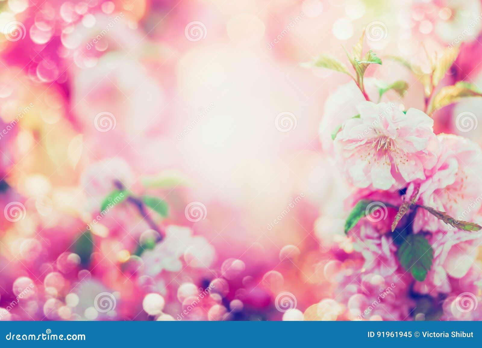 Blom- bakgrund för härlig sommar med rosa blomma, solsken