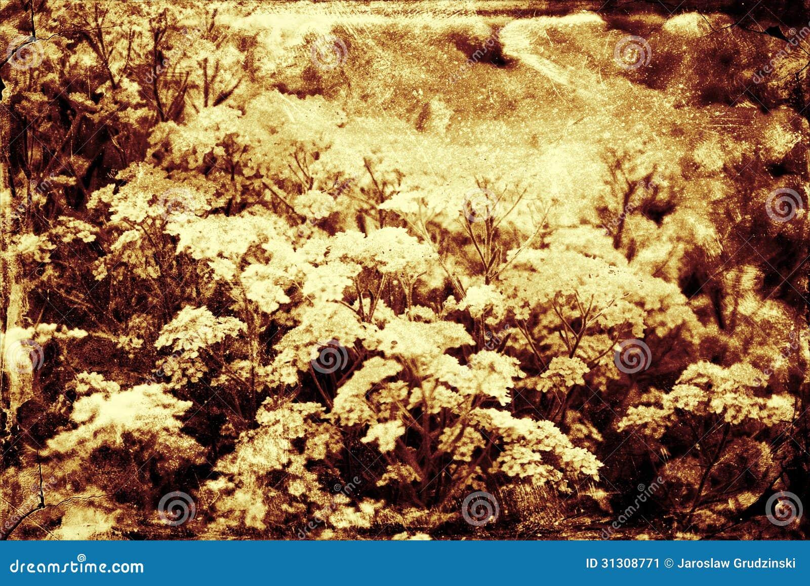 Blom- bakgrund för tappning
