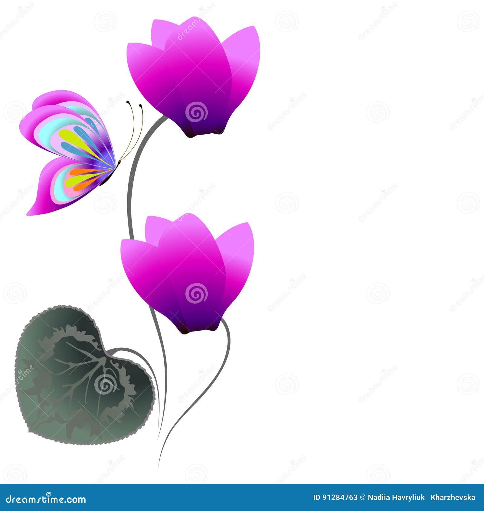 Blom- bakgrund med cyklamen och fjärilen