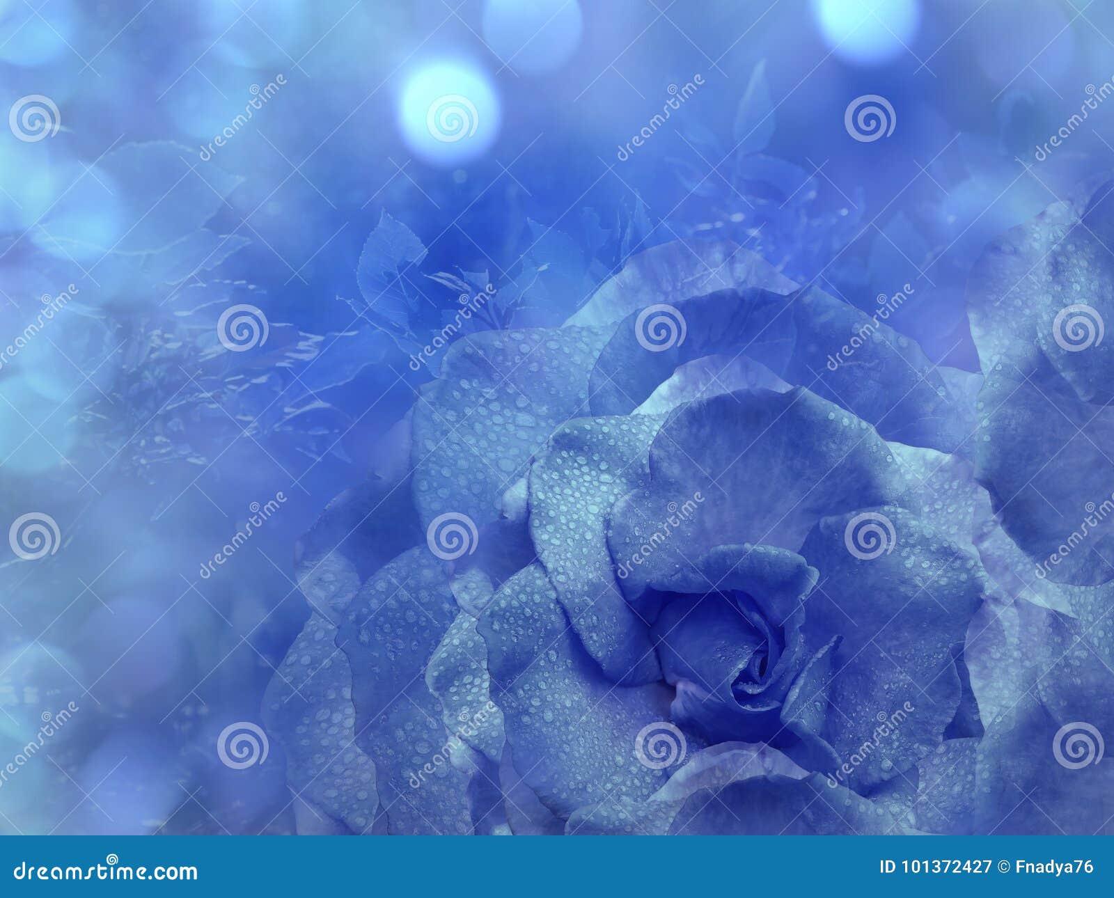 Blom- blå bakgrund från steg Blommar sammansättning En blomma av slösar rosa på en genomskinlig blå bakgrundsbokeh Närbild