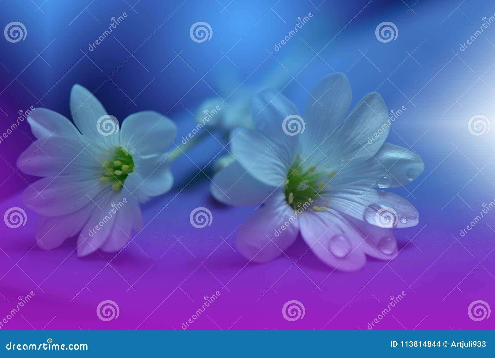 Blom- fjäder för abstrakt konstbakgrundsdesign Liten droppe droppe Lilor blomma Vårgränsbakgrund