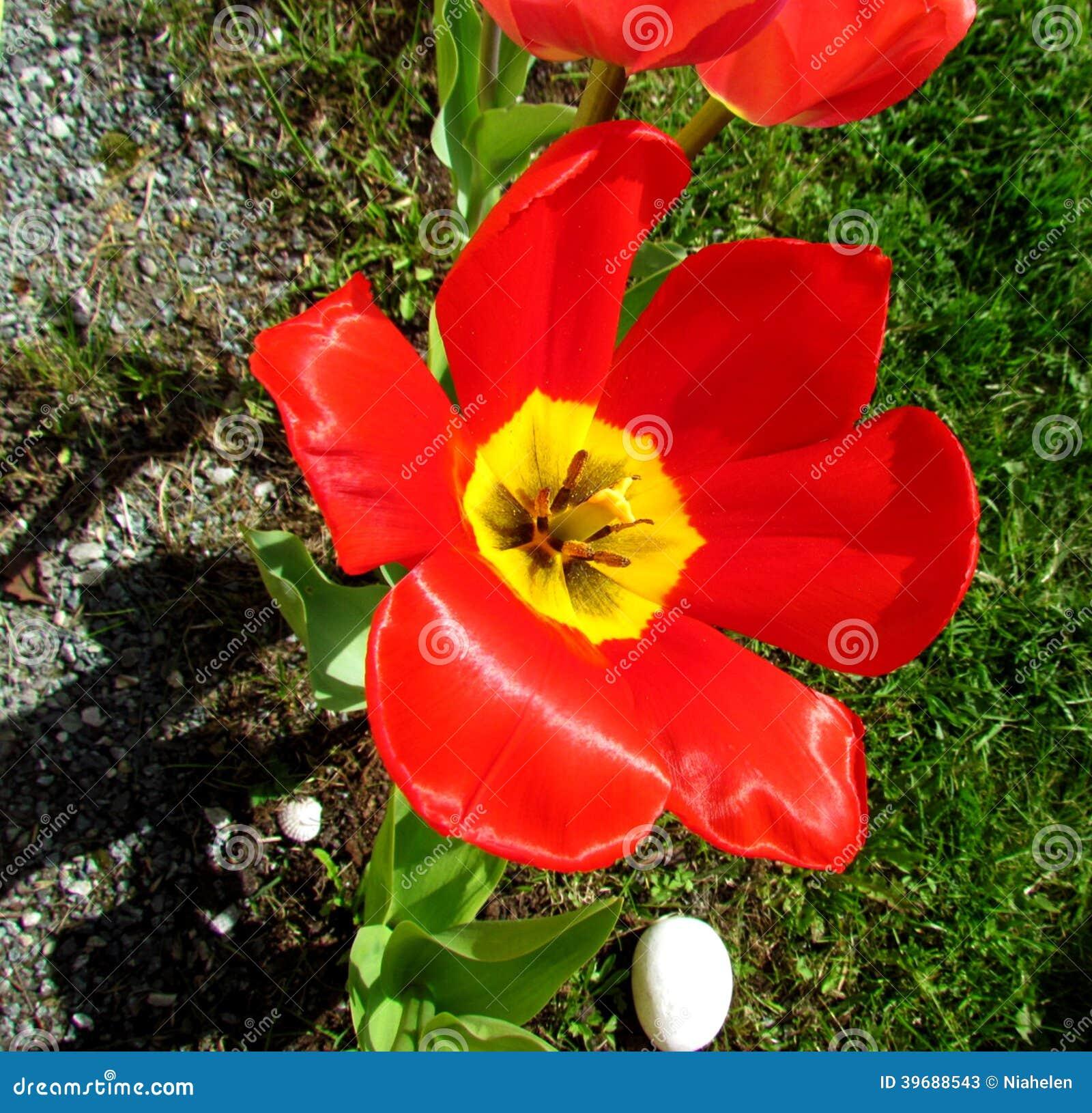 Blom- i trädgården