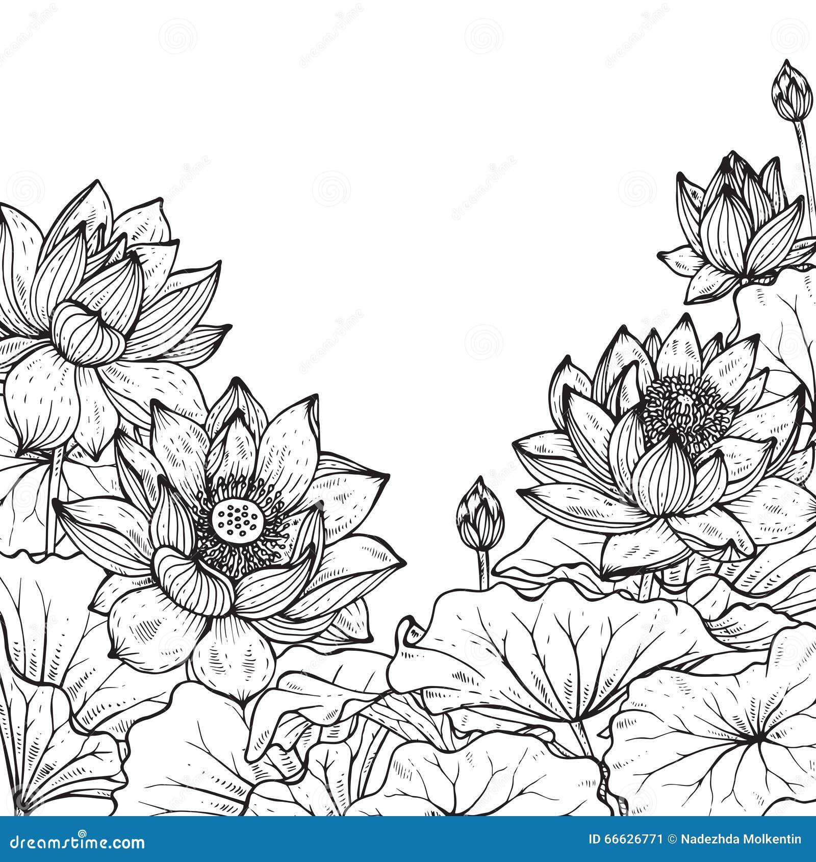 Blom- ram för härlig monokrom vektor med lotusblomma