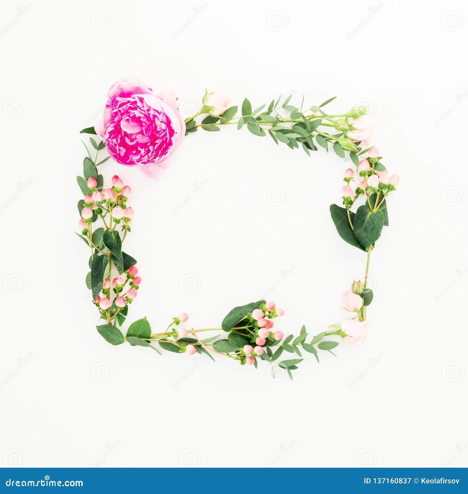 Blom- ram med rosa blomma-, hypericum- och eukalyptusfilialer på vit bakgrund Lekmanna- lägenhet, bästa sikt