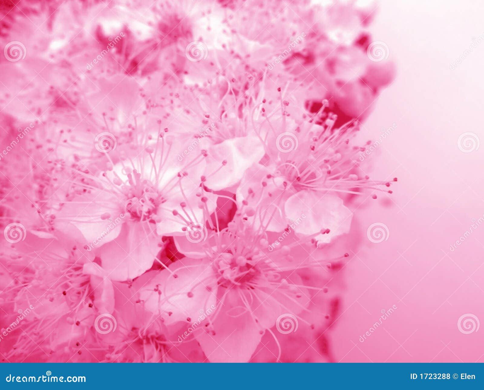 Blom- rosigt för kort