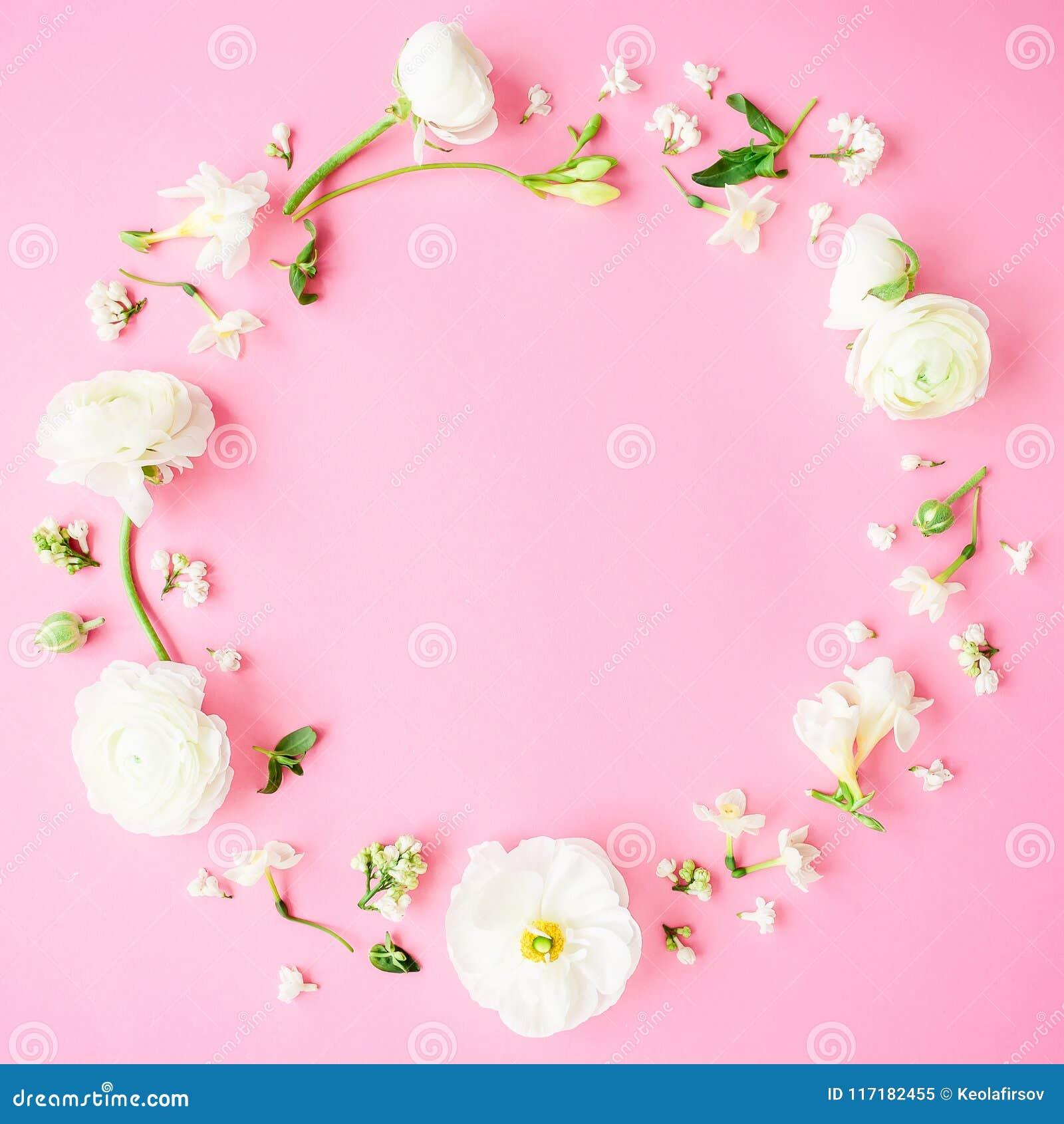Blom- rund ram som göras av vita blommor, knoppar och kronblad på rosa bakgrund Lekmanna- lägenhet, bästa sikt abstrakt pastell f