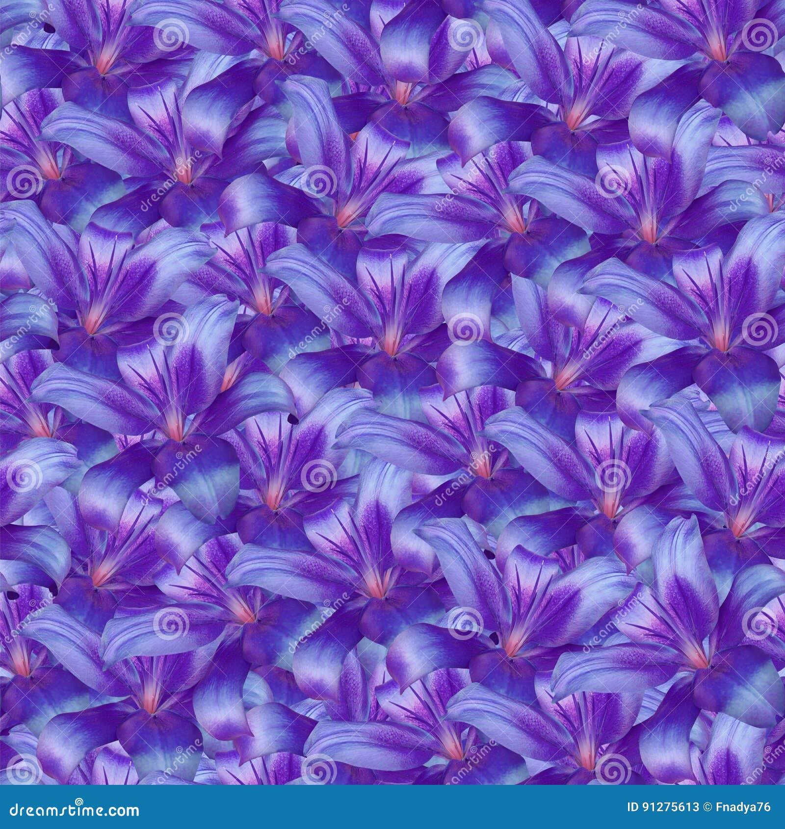 Blom- sömlös oändlig bakgrund Lila-blått blommar liljan för design och printing Bakgrund av naturliga blommor