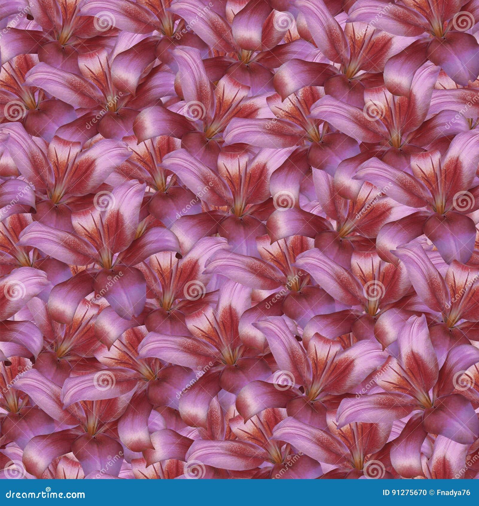 Blom- sömlös oändlig bakgrund Röd blommalilja för design och printing Bakgrund av naturliga blommor