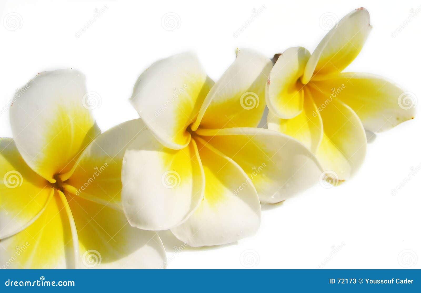 Blom- sammansättning 2