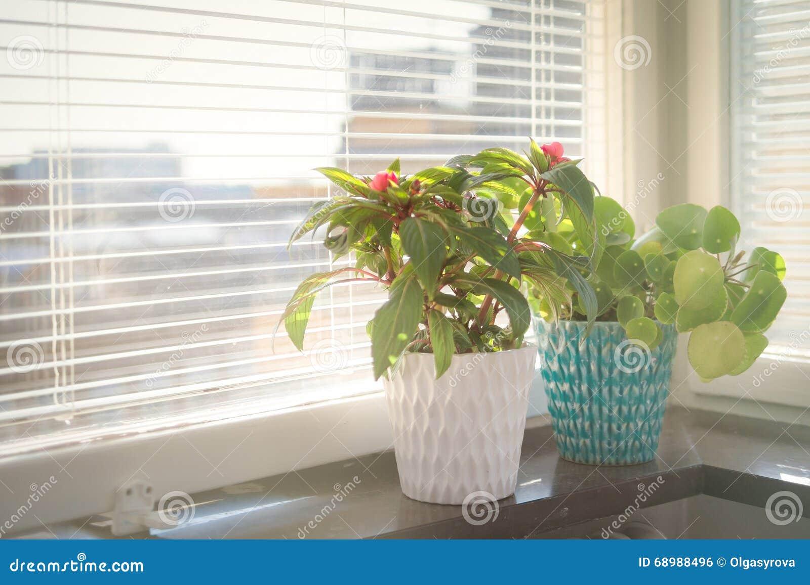 Blomkruka två på fönsterbrädan