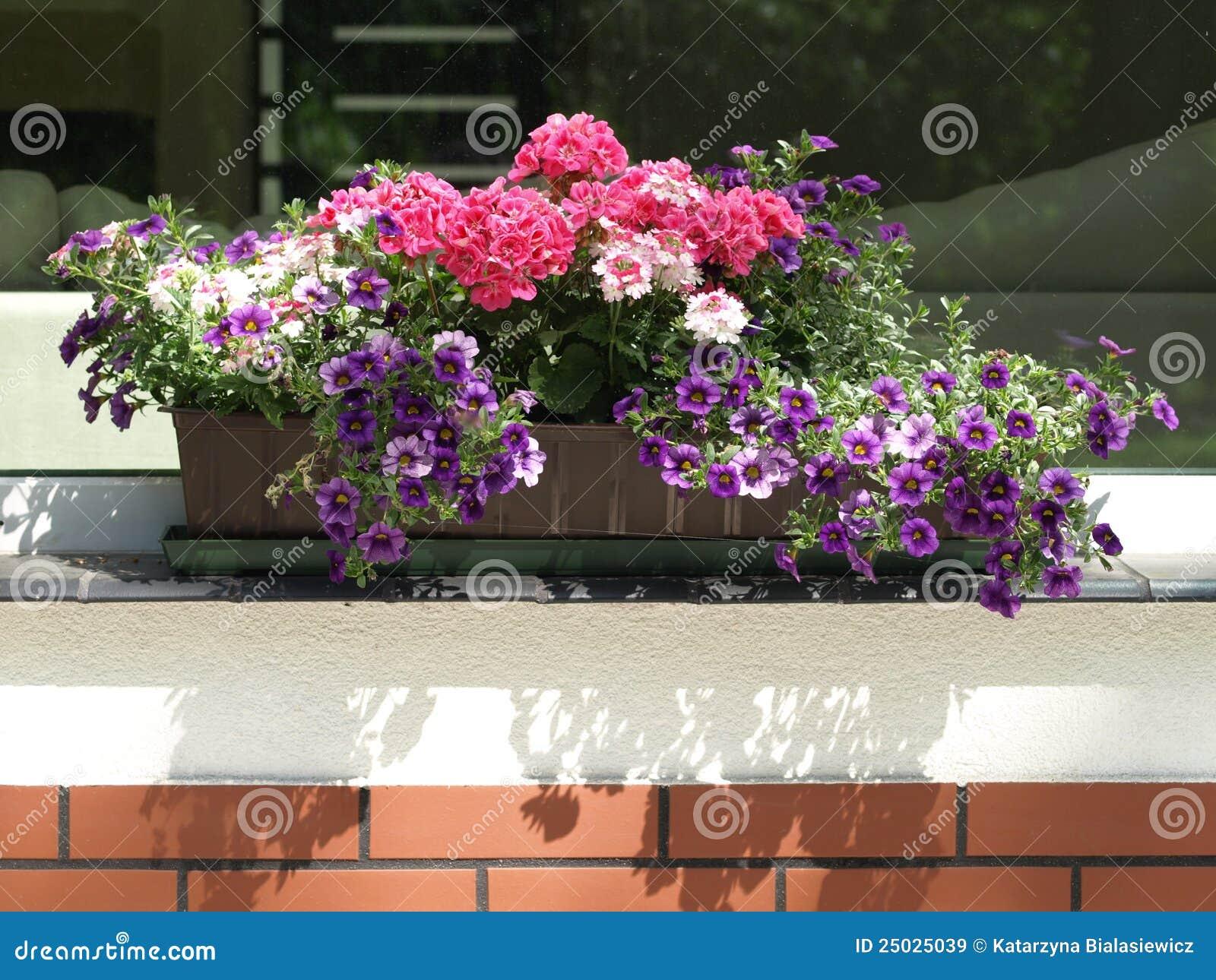 Blomkrukaparapet