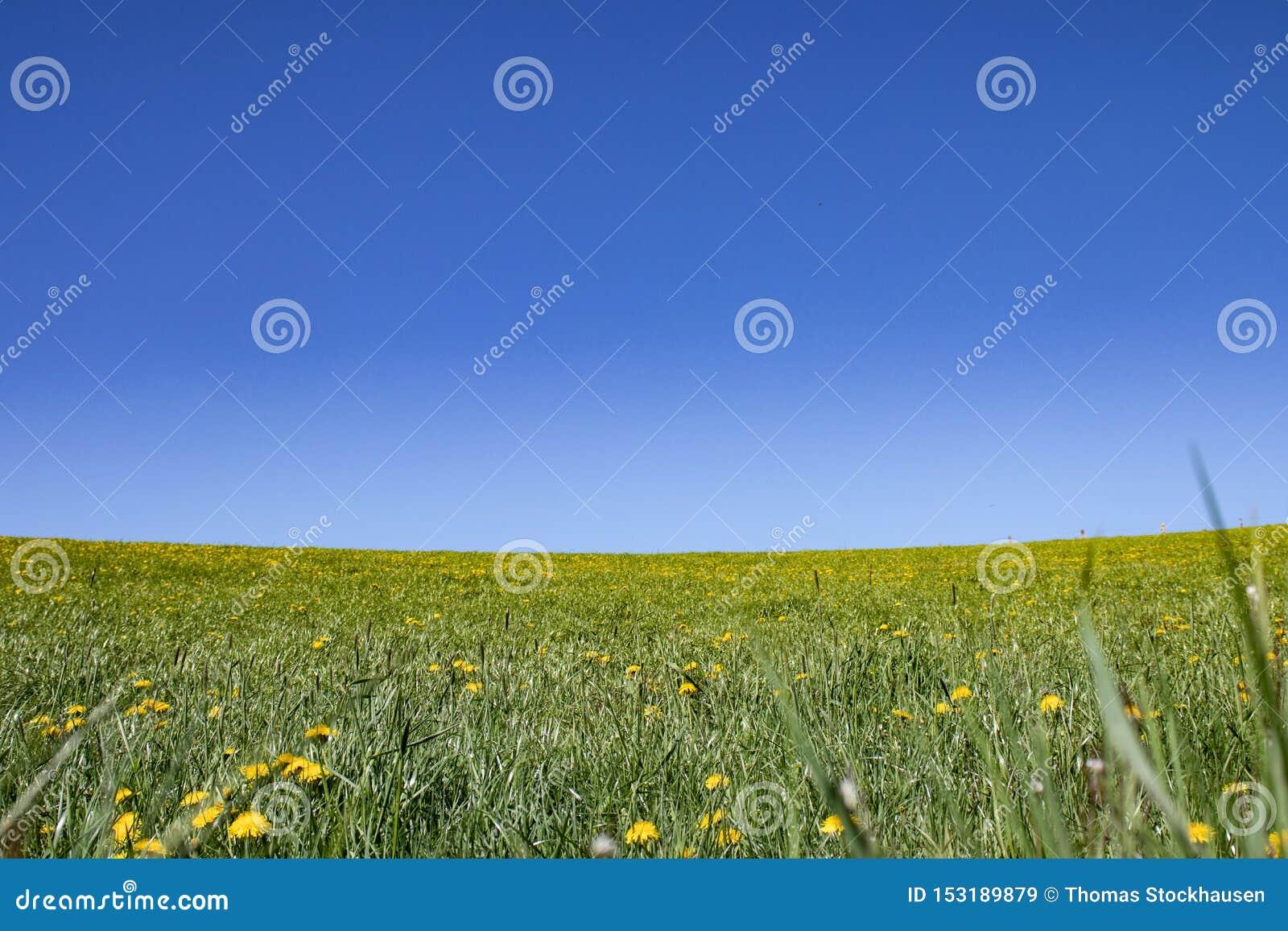 Blommaäng, grässlätt under blå himmel
