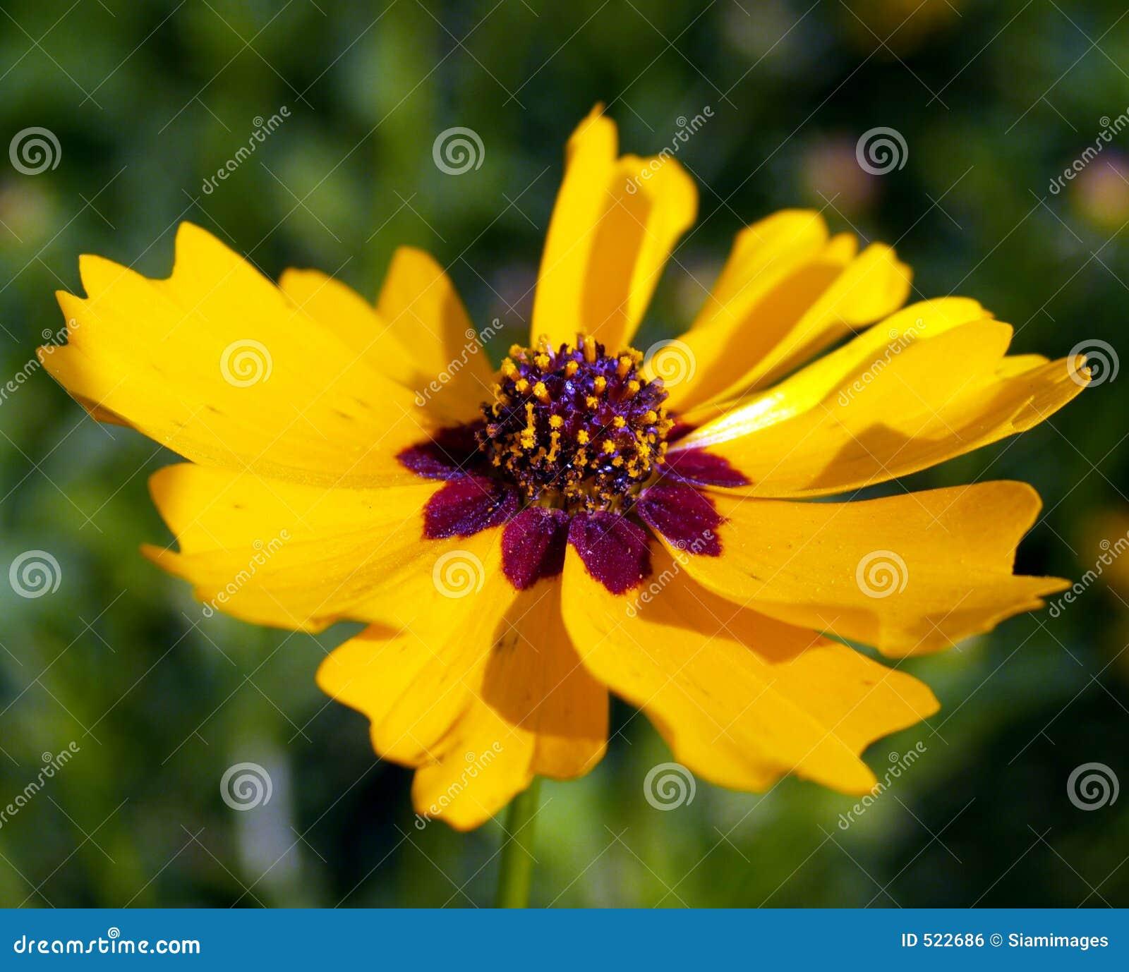 Blomma 10