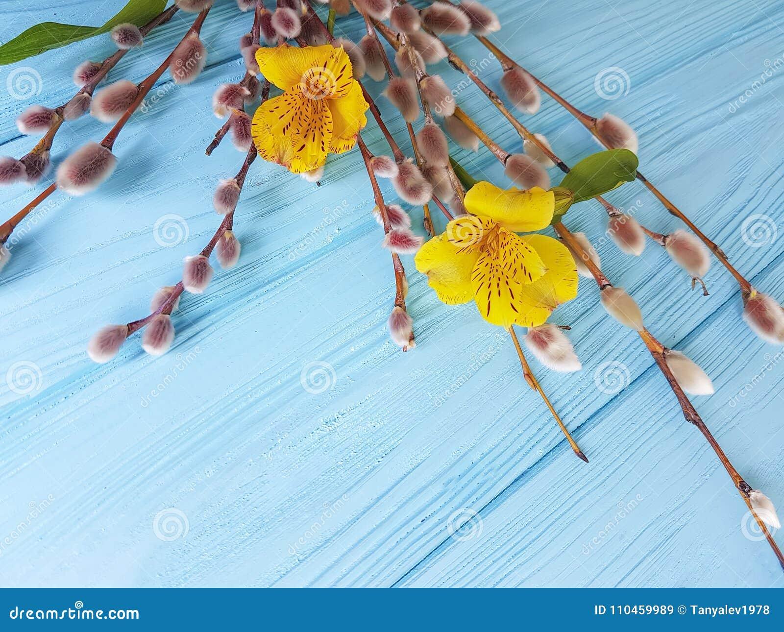 Blomma alstroemeria, fatta pilen på en blå träbakgrund