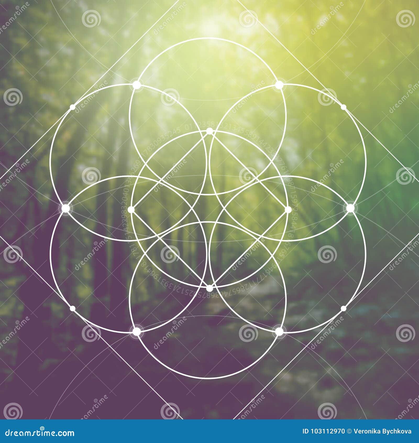 Blomma av liv - gripa in i varandra cirklar forntida symbol framme av suddig photorealistic naturbakgrund Sakral geometri - M