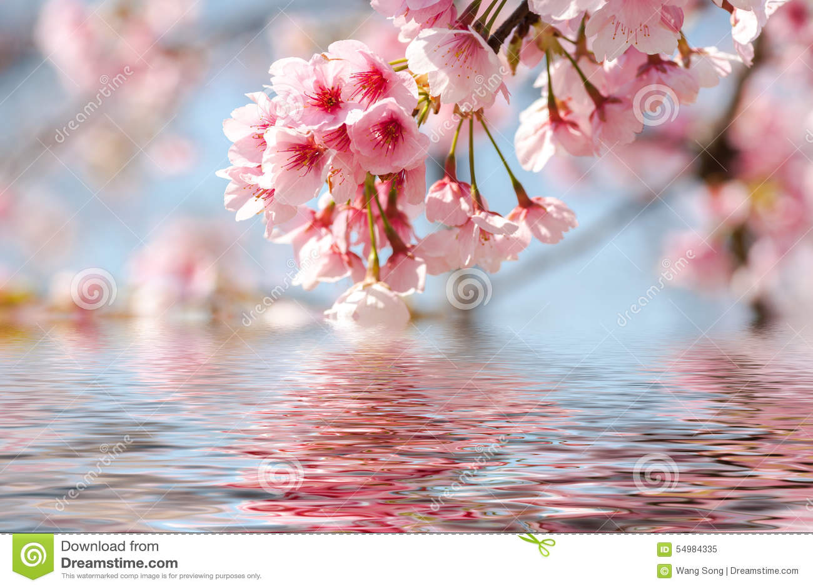 Blomma blomningCherry