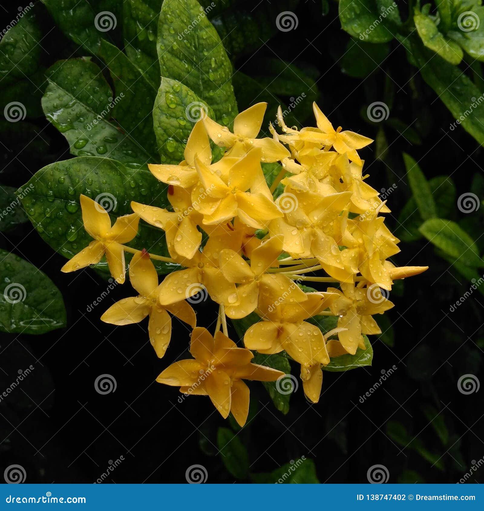 Blomma för blomma