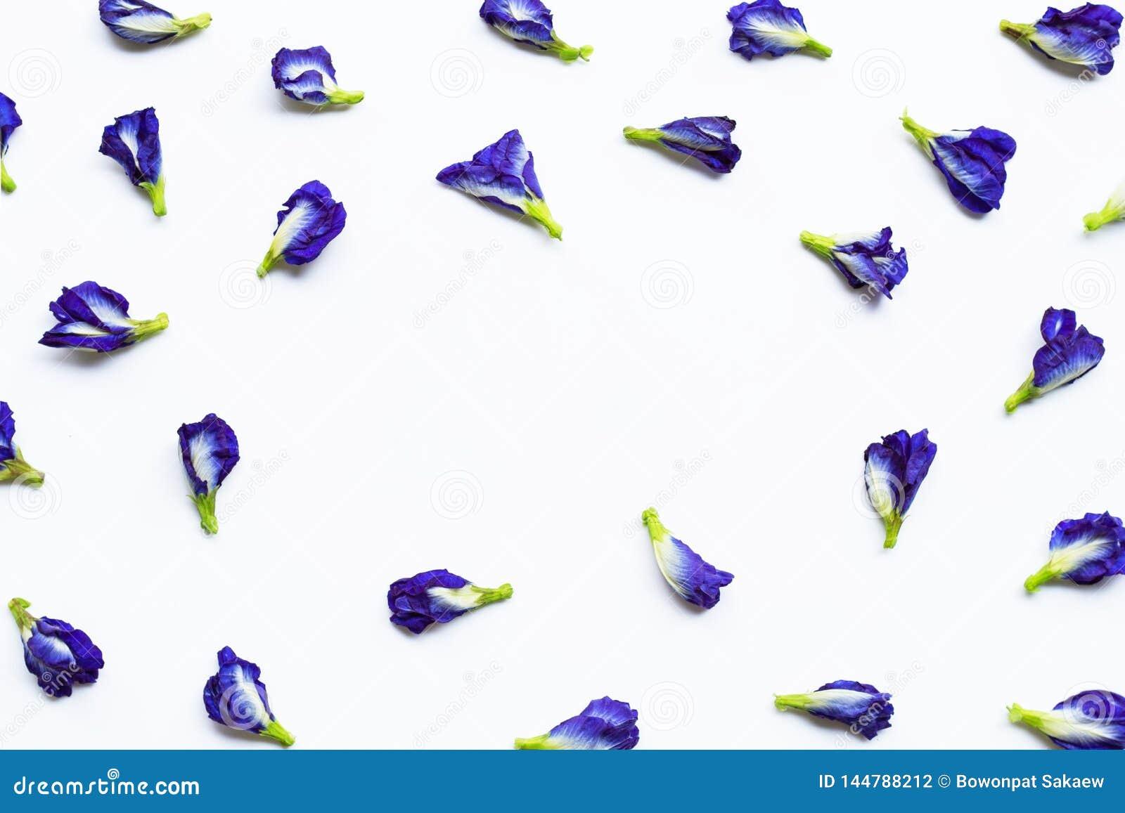 Blomma f?r fj?rils?rta p? vit