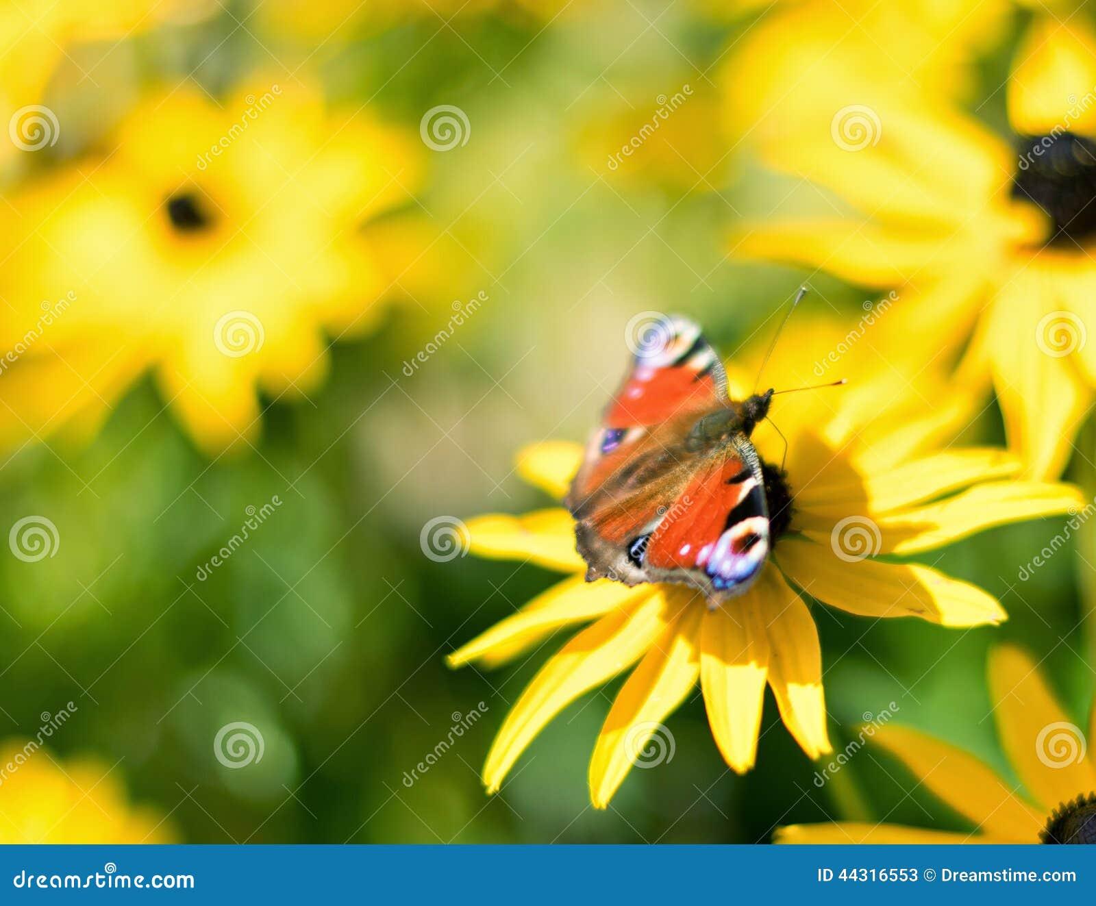 Blomma för makro för påfågelfjäril