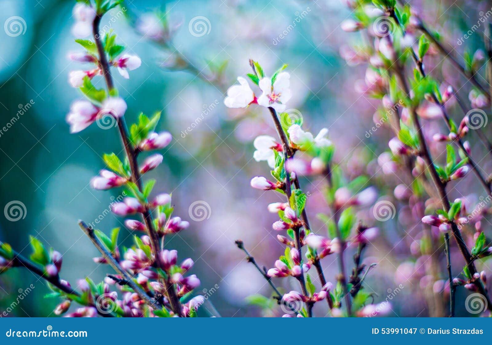 Blomma för vårrosa färger