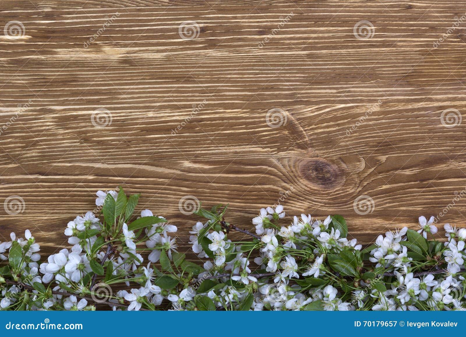 Blomma filialen av körsbäret på träbrädet