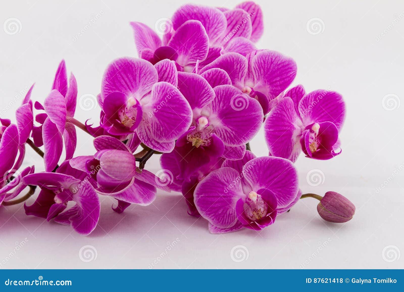Blomma filialen av orkidén