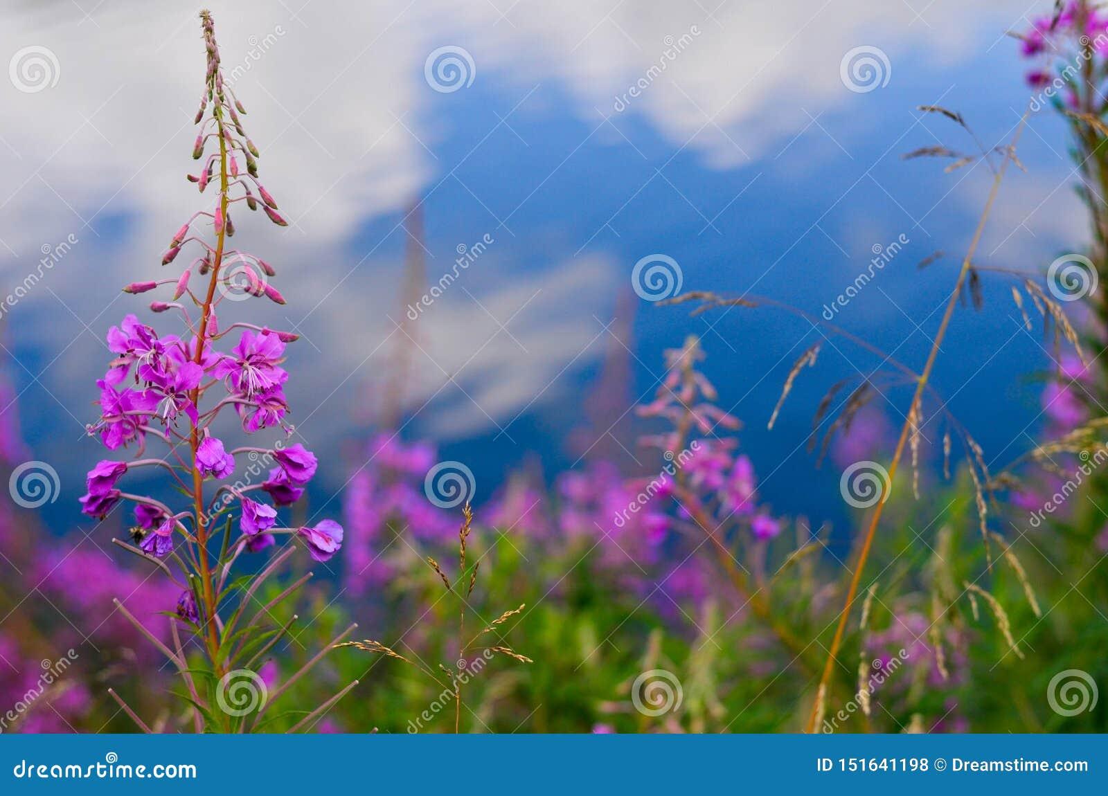 Blomma i natur