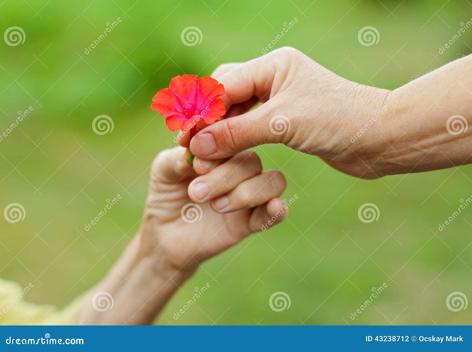 Blomma little som är röd