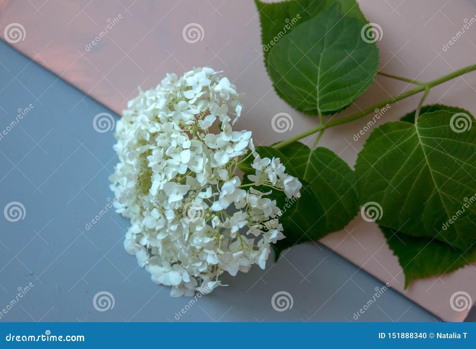Blomma med gröna sidor, på enfärgad bakgrund