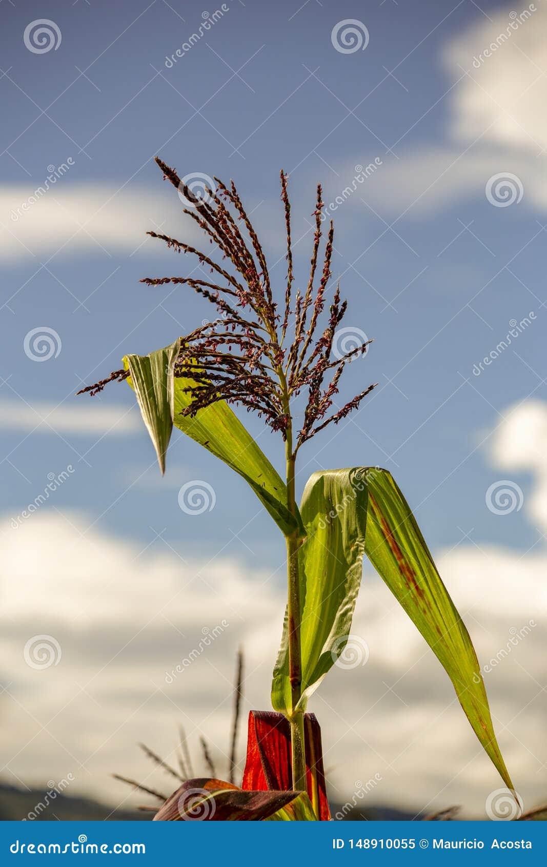 Blomma och sidor av en havrev?xt