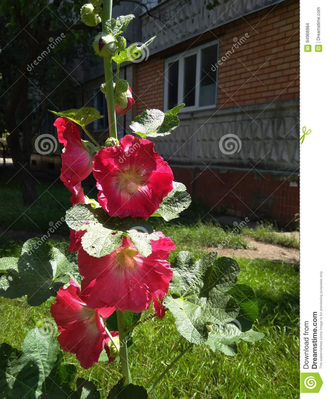 Blomma red
