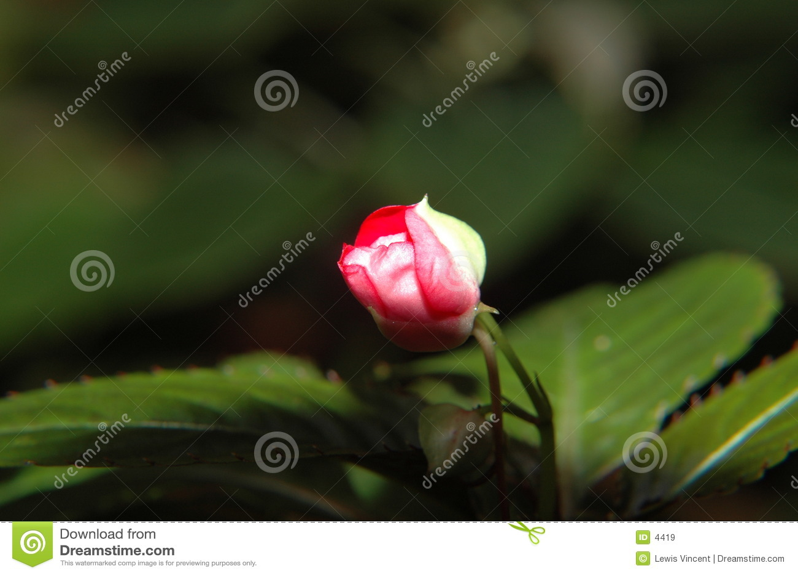 Blomma till
