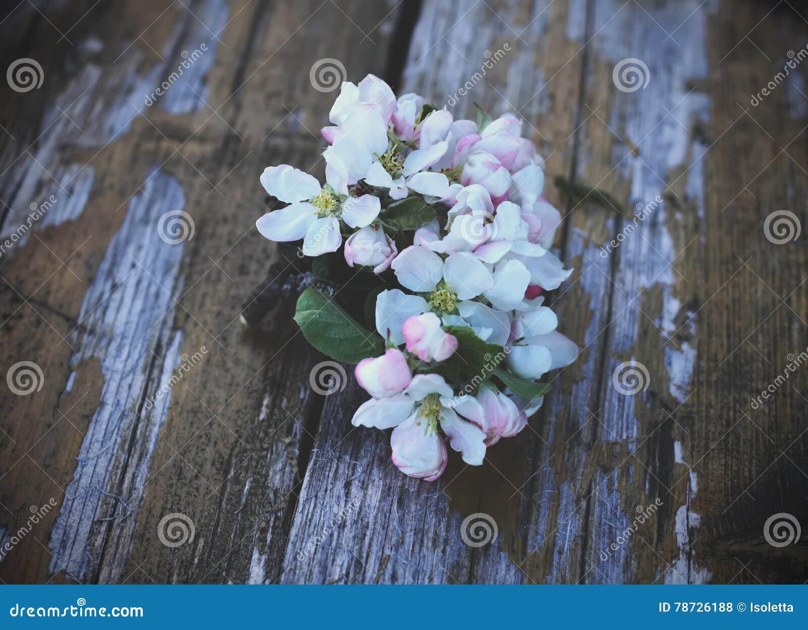 Blomma tree för äpple