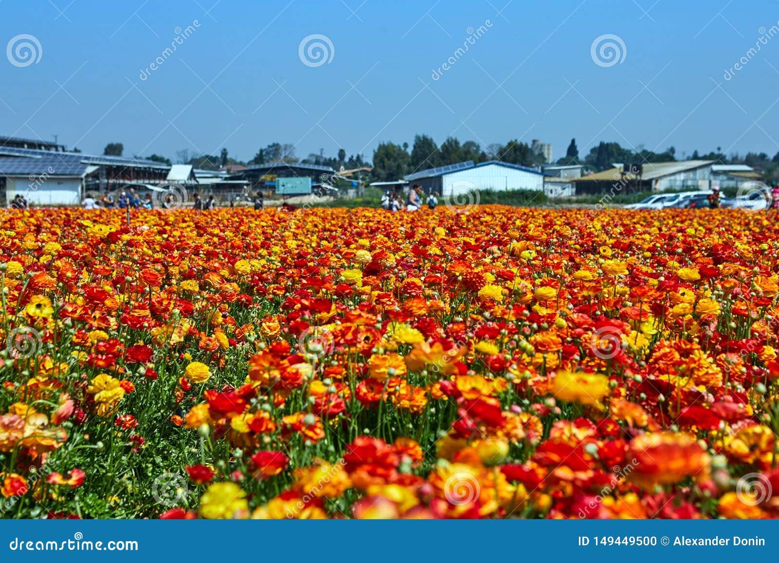 Blomma vildblommor, f?rgrika sm?rblommor p? en kibbutz i sydliga Israel