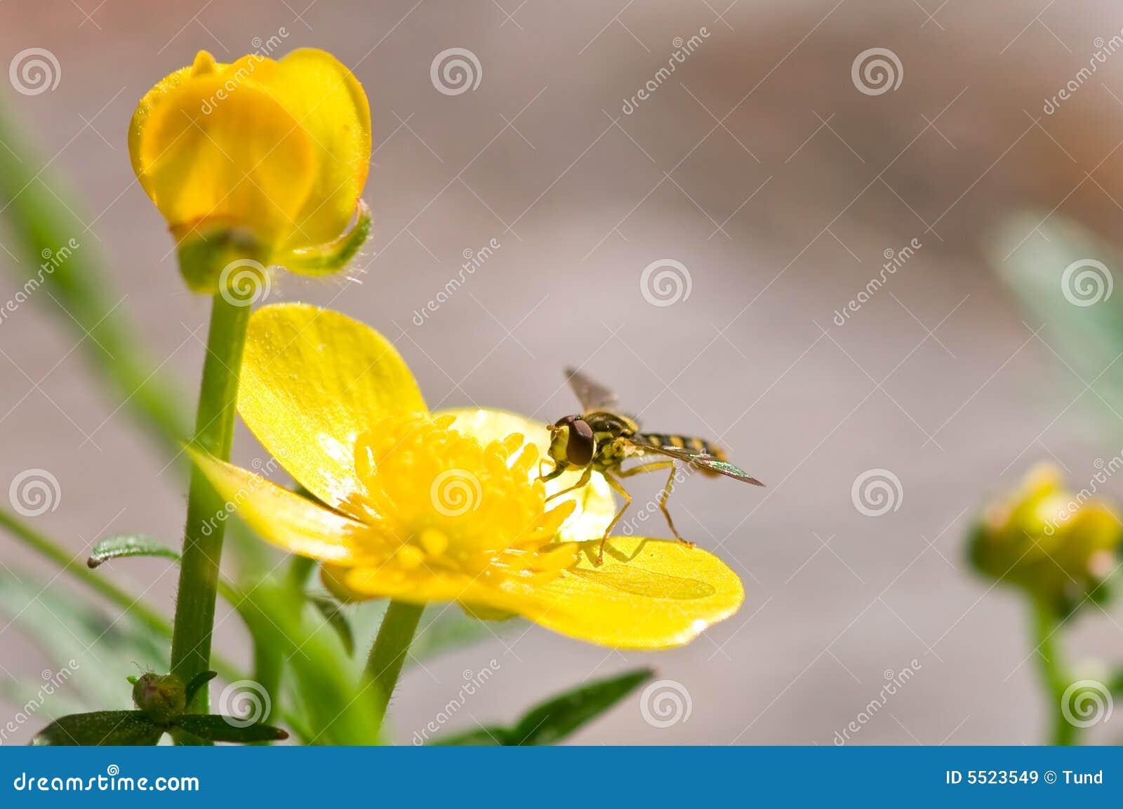 Blommafluga