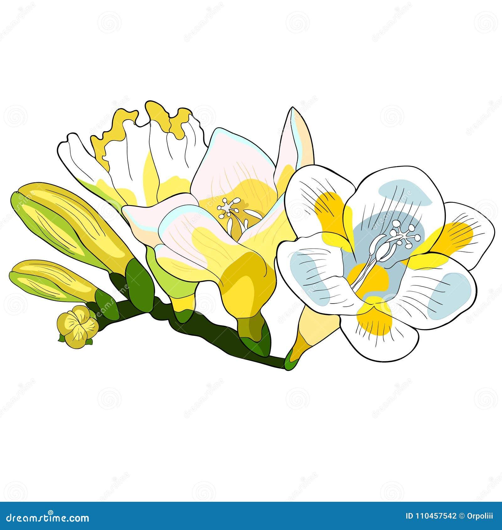 Blommafreesiasort av irisvektorillustrationen