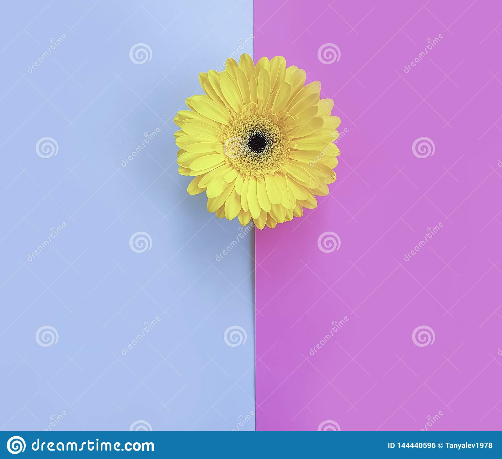 Blommagerbera på idérik härlig minimalism för färgrik för säsongtextur romantisk bakgrund för vår